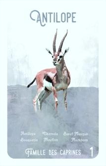 1-antilope