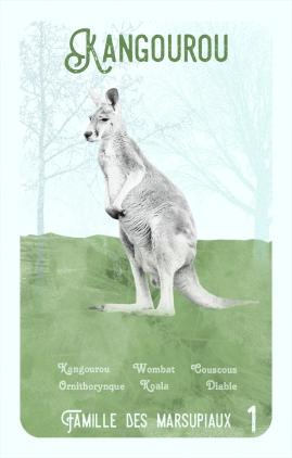 1-kangourou