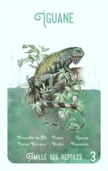 3-iguane
