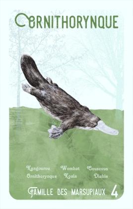 4-ornithorynque