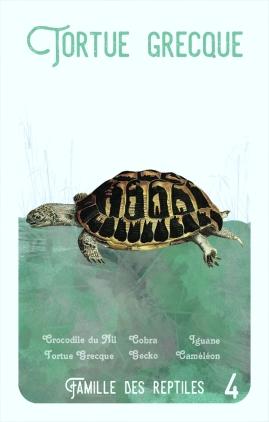 4-tortue-grecque