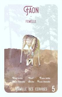 5-faon-femelle