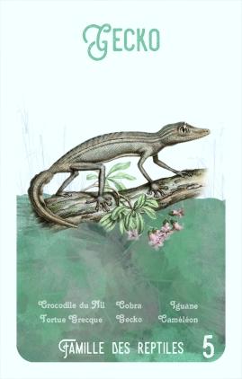 5-gecko