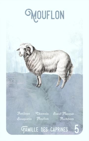 5-mouflon