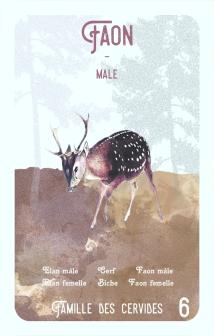 6-faon-male
